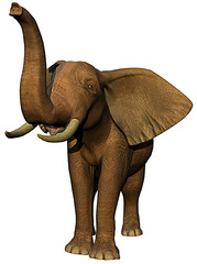 african elephant is calling