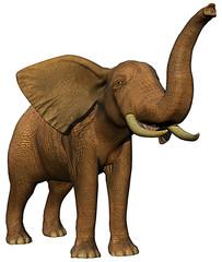 african elephant a
