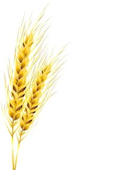 Wall Murals Draw Spighe di Grano Dorato-Golden Ears of Corn-Vector
