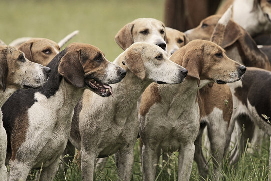 Hundemeute