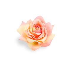 One white roses