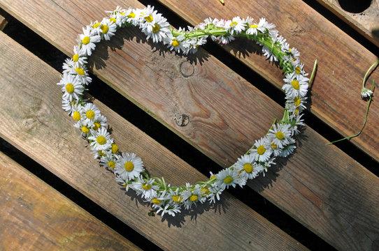 Heart symbol made of daisies