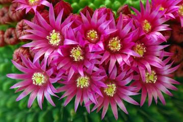 fiori 293