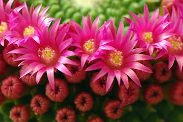 fiori 302