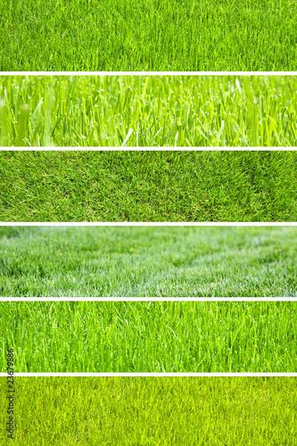 Pelouse bien verte photo libre de droits sur la banque d for Pelouse tarif
