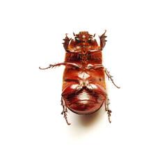 helpless bug