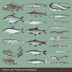 Vector set: fish, shells and seafood