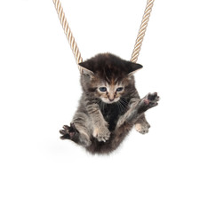 Kitten clinging to rope