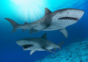 the 2 sharks