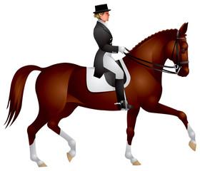 Dressage horse. Equestrian sport rider