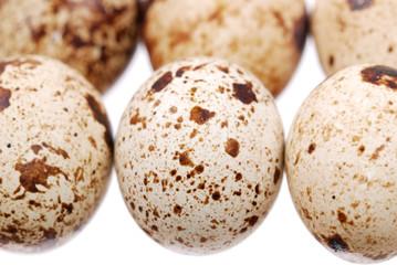 Photo of the quail egg