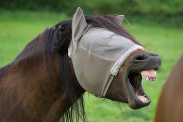 Cheval Masqué