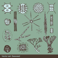 Alga and amoeba organism background set vector