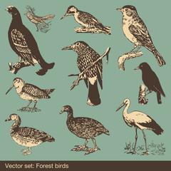 Forest bird set vector background