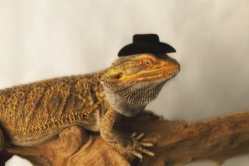 A Lizard Wearing A Cowboy Hat
