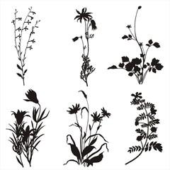 floral plant set