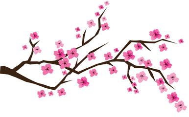 sakura brunches