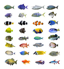 Great tropical fish collection on white background