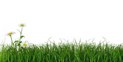 Photo sur Plexiglas Marguerites Green Grass and Daisy