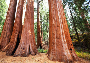 sequoya forest