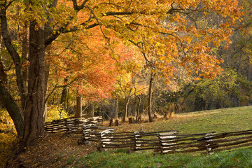 Mountain forest with split rail fence, fall colors
