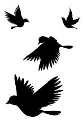 Vogelsilhouetten (mit Clippfad)