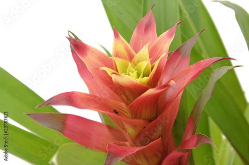 fleur exotique photo libre de droits sur la banque d 39 images image 23887621. Black Bedroom Furniture Sets. Home Design Ideas
