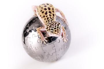 Gecko portrait!