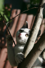 Kitty hunter in a tree