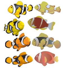 Clownfish   white background