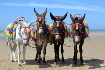 Tuinposter Ezel Donkeys at a beach resort in UK