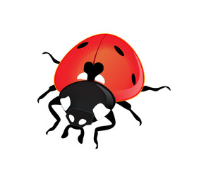 Vector ladybird on a white background