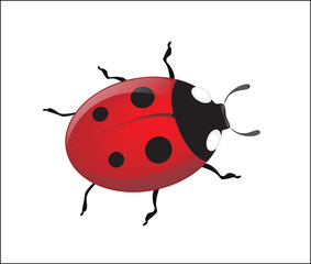 Vector ladybug on a white background