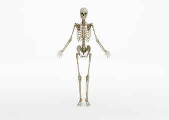 Skeleton 01