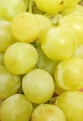 Grüne, frische Weintraube