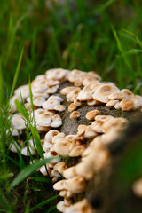 Pilze am Stamm