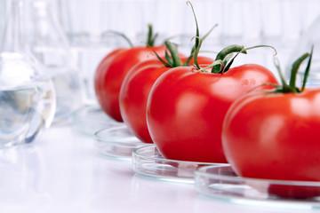 tomato experiment