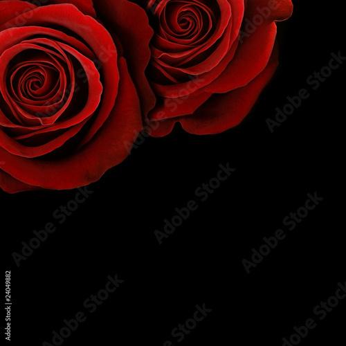 rote rosen stockfotos und lizenzfreie bilder auf bild 24049882. Black Bedroom Furniture Sets. Home Design Ideas