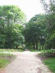 Skrzyżowanie w parku