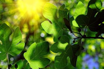 Green leaves whit sun beans
