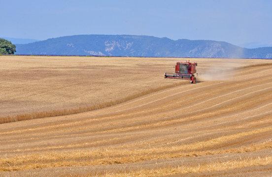 plus de blé à Valensole