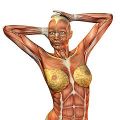 Wall Mural - Muskelaufbau weiblicher Oberkörper
