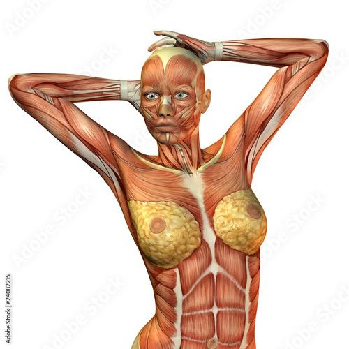 Muskelaufbau weiblicher Oberkörper\