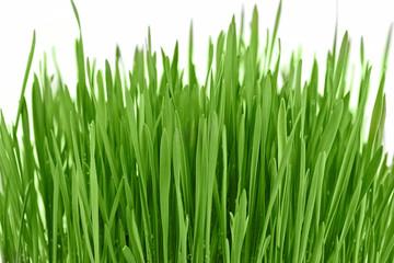 Fresh new green grass background