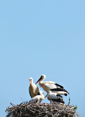 Störche - Storks