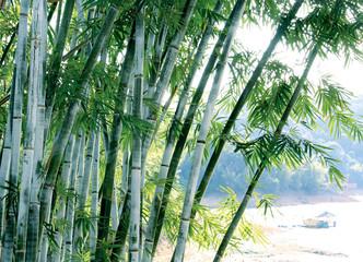 Groene bamboe boom