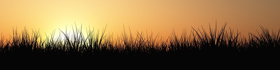 Gras Panorama bei Sonnenuntergang