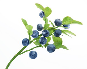 Blueberry branch on a white background