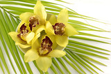 Tropical spa -yellow orchid on palm leaf