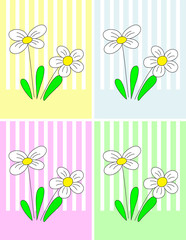 White flowers with four colorful backgrounds